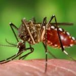 Chikungunya and its Homeopathic treatment