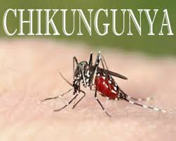 Chikungunya fever and its homeopathic treatment